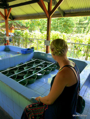 Schildkröten Schutzstation in Serangan