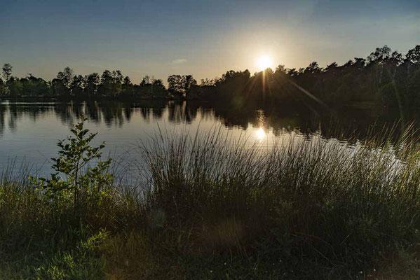 Dingdener Heide am Niederrhein