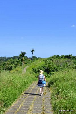 Campuhan Ridge Walk in Ubud