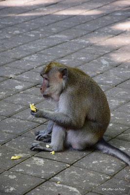 Sacred Monkey Foresr Sanctuary