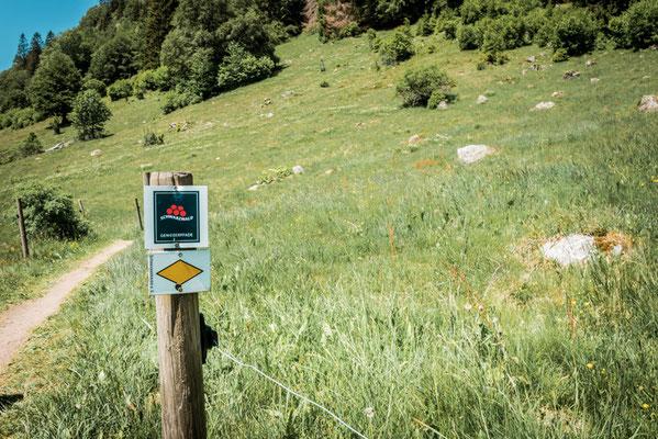 Geißenpad im Schwarzwald