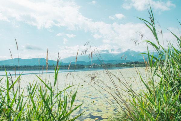 Hopfen am See im Allgäu