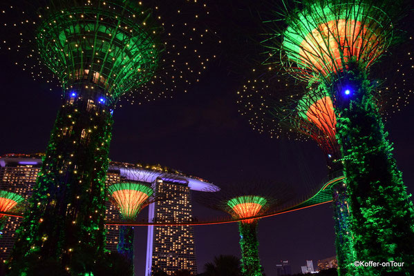 Supertrees Grove in Singapur