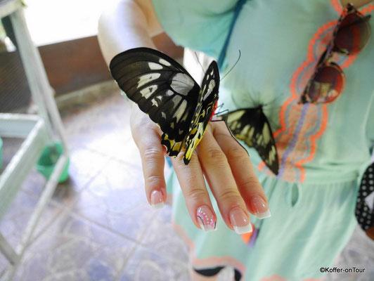 Schmetterlings Parl Tabanan