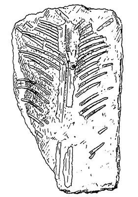 Ctenochasma roemeri holotype