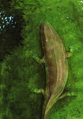 Cyclotosaurus buechneri reconstruction by Joschua Knüppe