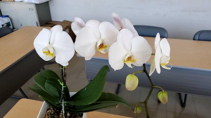 大金運輸 蘭の花
