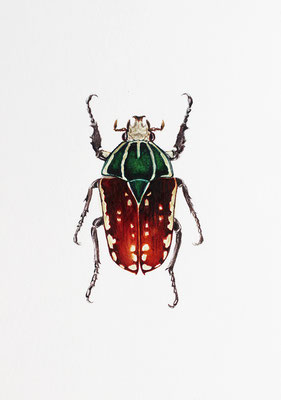 """Mecynorhina Ugandensis"" Watercolor on Paper, 9x12,5cm, 2018"