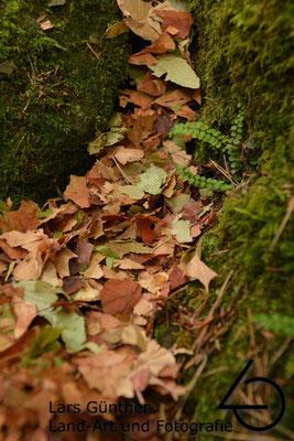 Getrocknete Herbstblätter der letzten Jahre - Konstein