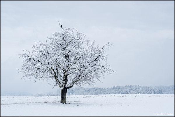 Winter in Ettingen