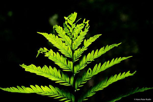 Goudveld Forest