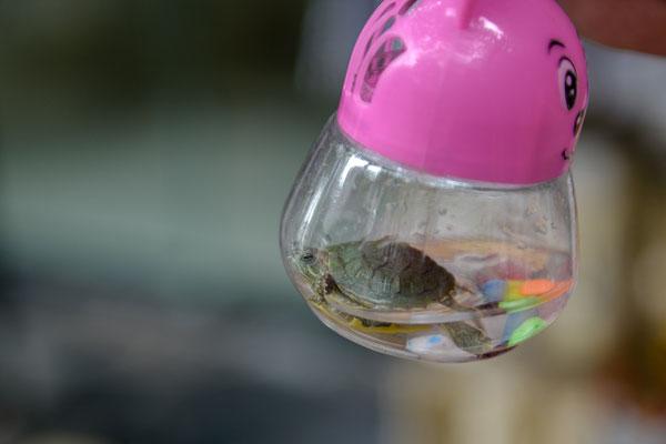 """Chengdu, Altstadt, lebende Schildkröte als """"Spielzeug"""""""