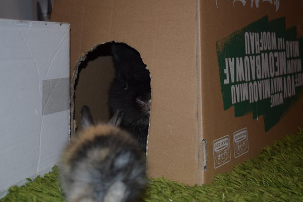 Bemitha schaut zu Sirius in die Schachtel