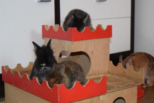 Belvina, Beria und Baal