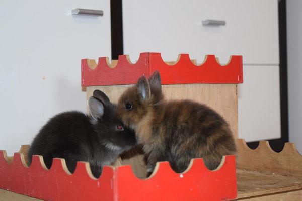 Belvina und Baal
