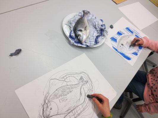 Im Kinderatelier in der Juks in Biberach: eine echte Dorade, wir sehen genau hin, riechen und betasten sie und zeichnen sie.