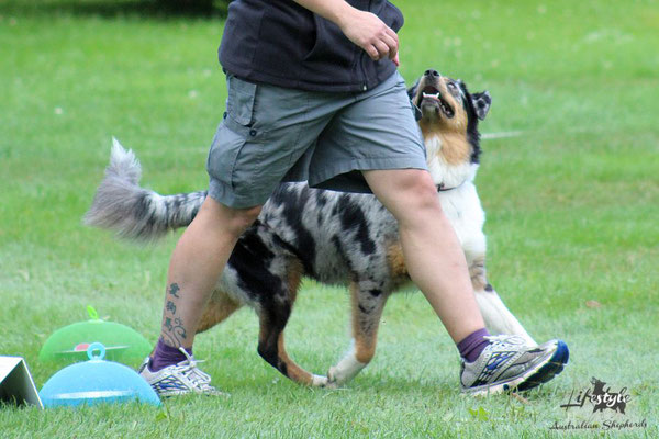 Rally-Obedience-Turnier (Klasse 1) Sommer 2017