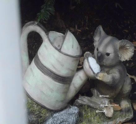 Koaladeko/Aufnahme unterwegs 2017