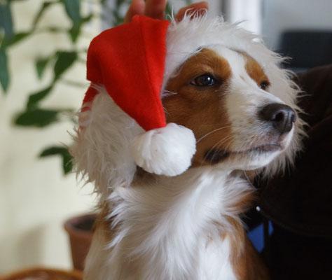 Weihnachts-Aponi.... süüüüüssss!