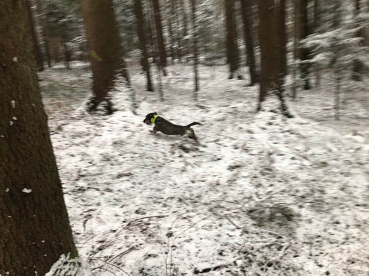 Casimir unterwegs
