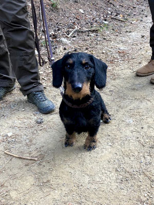 DASHA alias Alma