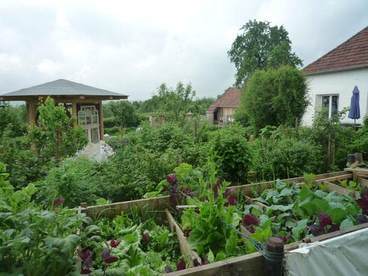 Gemüse im Hochbeet
