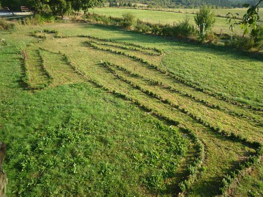 Landart Projekt: Figur des liegenden Menschen - Länge 30m Buchsbaumpflanzung