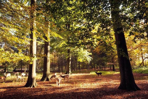 Hirschpark Blankenese