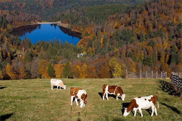 Lac de la Lande, Vosges, France