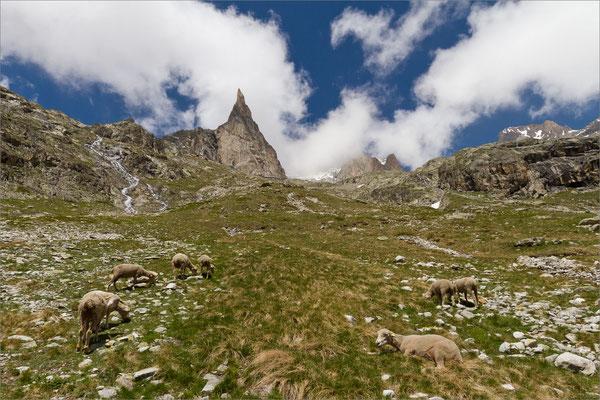 Aiguille Dibona (massif du Soreiller), Vénéon, France