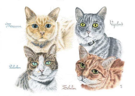 [commande] Portraits de 4 chats, crayons de couleur, A3, 2019