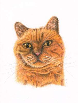 [commande] Blimmchen, chat roux, crayons de couleur, A4, 2019