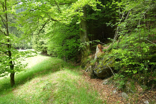 Der ehemalige Mühlgraben vom Grümpenwehr führt oberhalb der Wiese entlang