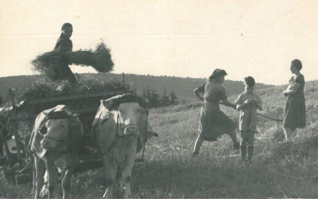 Heuernte (Hehra) im Thüringer Wald im 20. Jahrhundert
