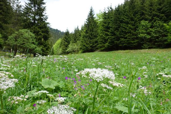 Talwiese im Schiefergebirge