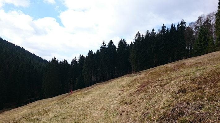 Borstgrasrasen auf der Steinbachswiese, Frühling 2017