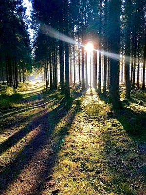 Schattenspiele im Wald.