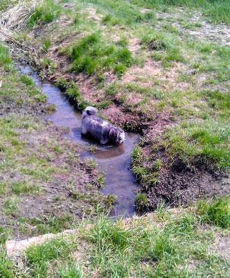 Brakiges Wasser liebt er sehr.