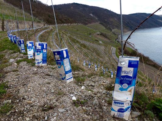 Recycling pur! Auch beim Weinanbau.