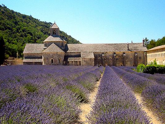 Lavendelfelder an der Abbaye de Senanque in der Provence.