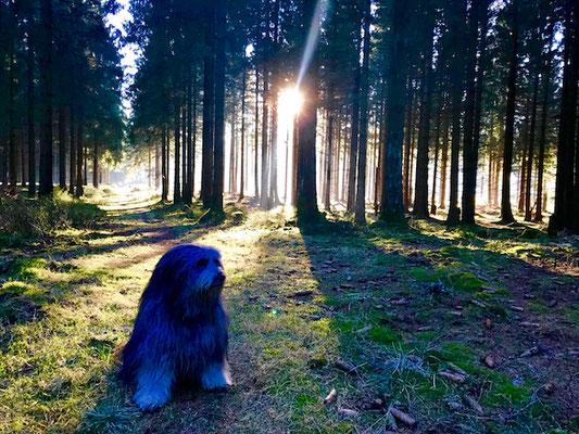 Benny im Wald.
