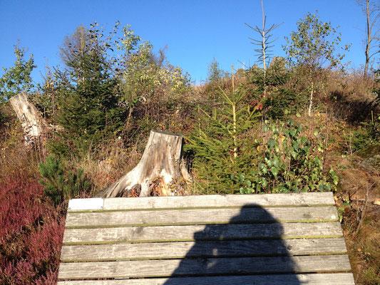 Nicht an Halloween: zwischen dem Kyrill-Tor und der Hiebammenhütte bzw. im Berg daneben III.