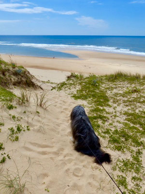 Sehnsüchtiger Blick zum Meer. Benny liebt auch Wasser.