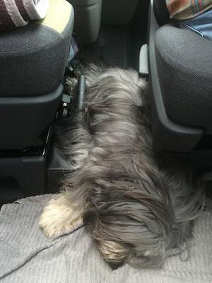 Hund findet überall Platz.