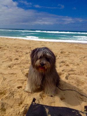 Benny liebt Sand und Strand. Buddeln mag es total.