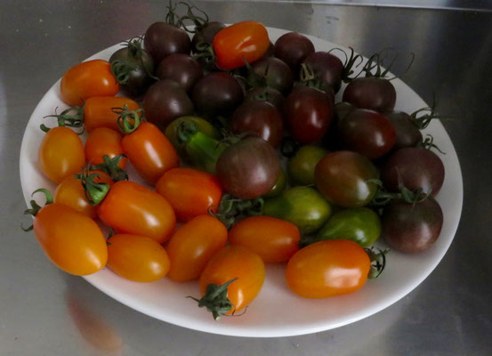 Cherry Tomaten in verschiedenen Farben
