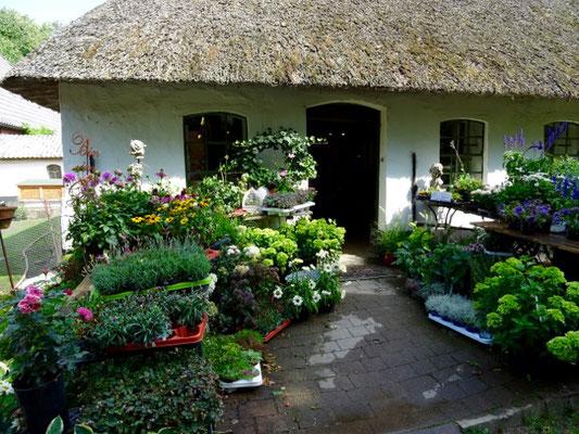 Blumen von Landladen Kühl