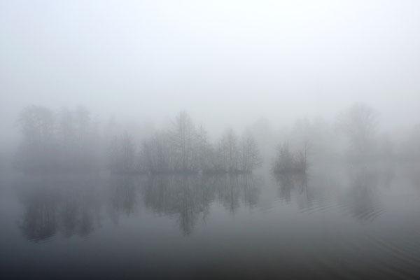 Nord-Aueweiher im Nebel, Foto: Benedikt Kirsch