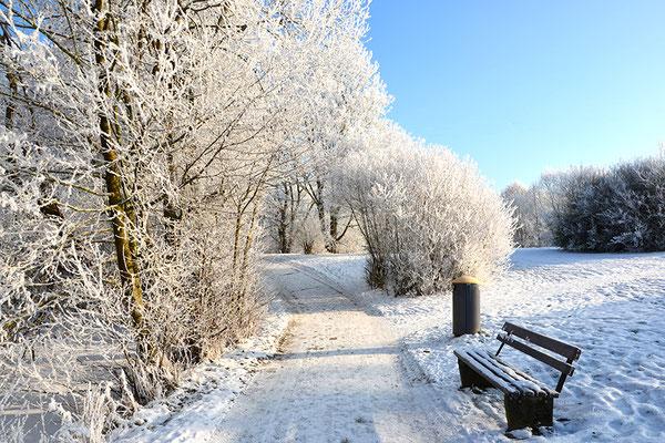 Süd-Aueweiher im Winter, Foto: Benedikt Kirsch