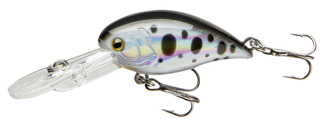 53-04414 dotted roach